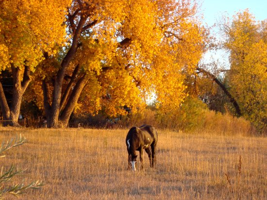 Arvada, CO: Fall time with the horses in the pasture nextdoor.