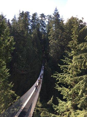North Vancouver, Canada: Pont suspendu