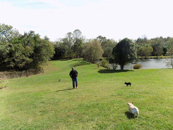 Mills River Photo