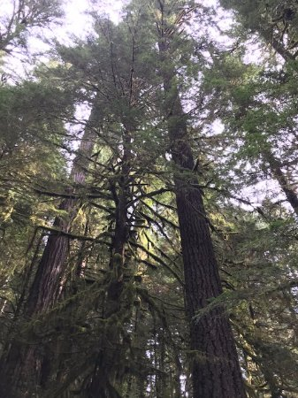 Salmon River Trail: These trees are so tall and straight