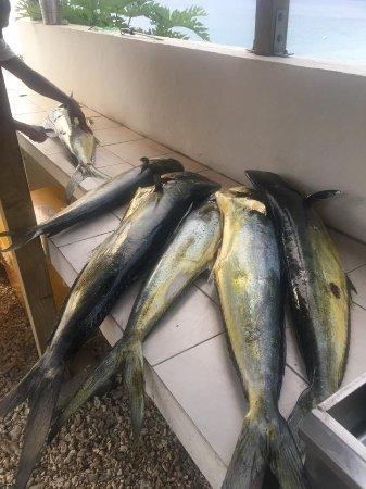 Port Havannah, Vanuatu: Mahi Mahi fish at Wahoo Bar Havannah Harbour Vanuatu