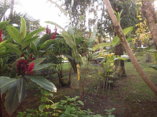 San Antonio De Belen, Costa Rica: Tropical paradise