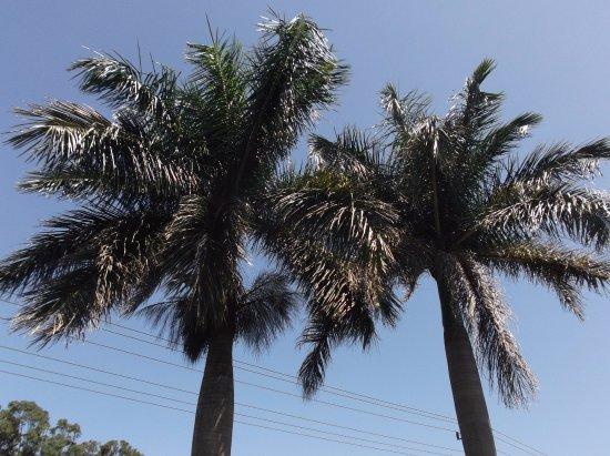San Antonio De Belen, Costa Rica: Resort atmosphere
