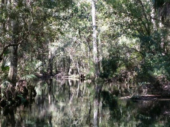 Wakulla Springs, Floride : IMG_20171019_121511_large.jpg