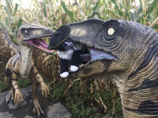 Danville, VT: Don't let the dinosaurs in the maze scare you.