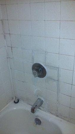 Rocky Top, TN: Disgusting bathtub and shower!!