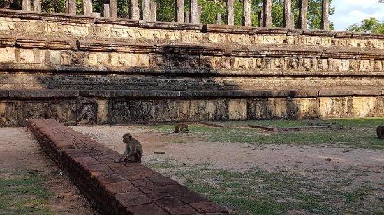 Scenic Grand Tours: tour srilanka