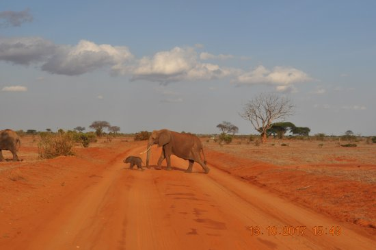 Aqua Paradise Safaris Day Tours: Mama Elefant mit Baby