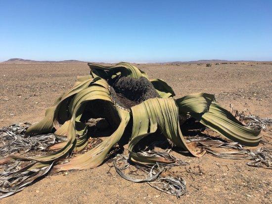 Hentiesbaai, Namibia: photo2.jpg