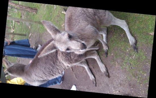 Cowes, Australia: 20170911_141206_large.jpg