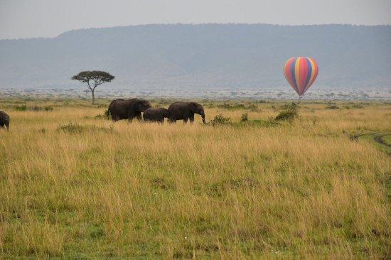 Mara Serena Safari Lodge: photo1.jpg