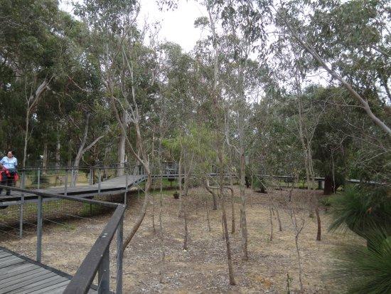 Yanchep, Australië: wildlife enclosure