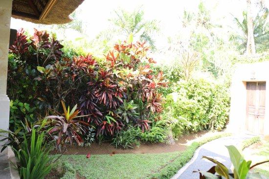Furama Villas & Spa Ubud: our garden