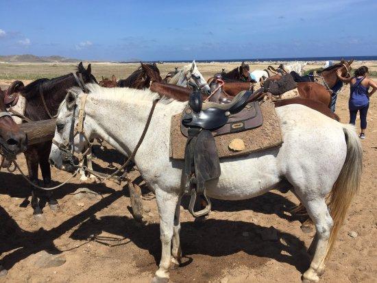 Paradera, Aruba: photo3.jpg