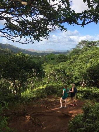 Maunawili Falls : photo1.jpg
