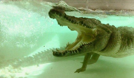 Alice Springs Reptile Centre: Make sure you go to the talks!
