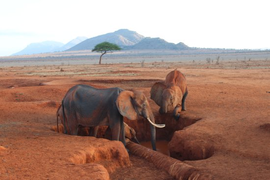 F. King Tours and Safaris - Day Tours: Elefanten..