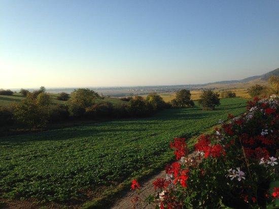 Hôtel du Bollenberg : La vue dés le matin au petit déjeuner! C'est juste splendide !