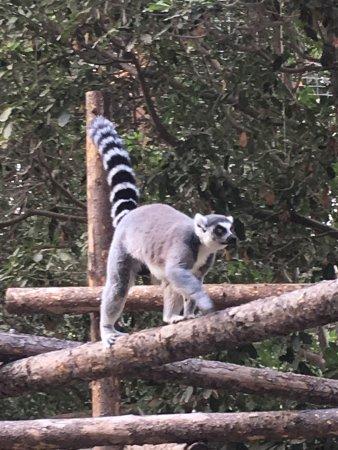 San Diego Zoo Safari Park: photo1.jpg