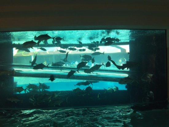 Golden Nugget Hotel: Aquarium on the main floor pool area