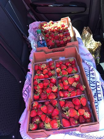 Madison, WI: So many strawberrries
