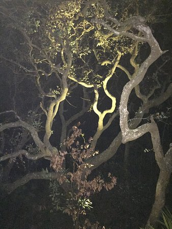 Hampton Inn & Suites Jekyll Island: photo4.jpg