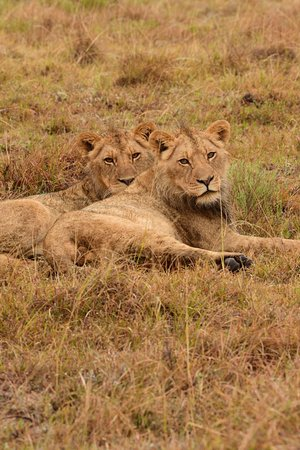 Lalibela Game Reserve: Brothers