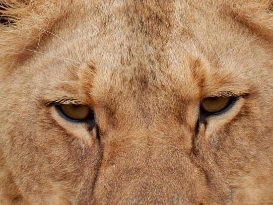 Lalibela Game Reserve: Look in my eyes