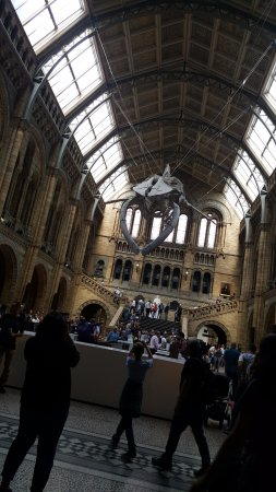 Natural History Museum: Excellent