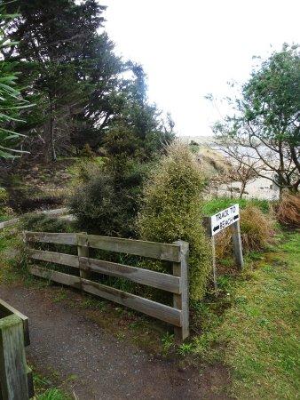 Surat Bay, New Zealand: Weg zum Strand