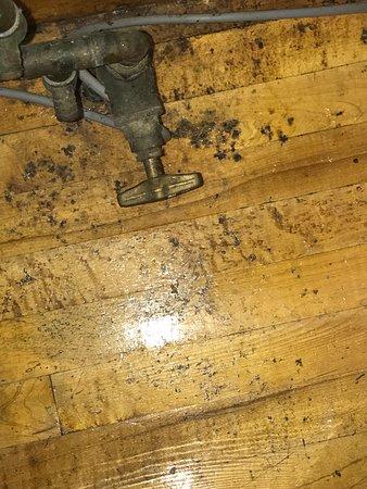 Kingsand, UK: Floor in-between sink and cooker