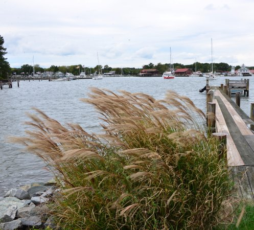 Point Breeze Bed & Breakfast : The B*B's dock, St. Michaels harbor in background