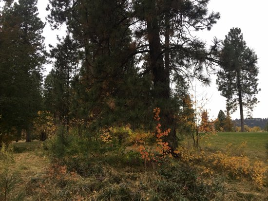 Spokane Valley, WA: Some of the fall colors