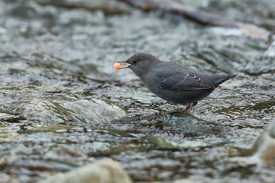 Bilde fra Lake Cowichan
