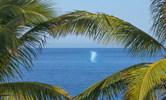 فيلا ديل فارو: Whales at Villa del Faro!