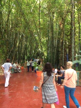 Une for t de bambous qui ne vaut pas la bambouseraie d for Jardin foret