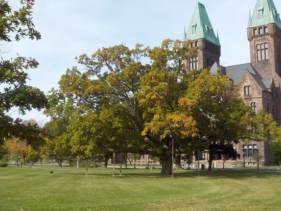 Richardson Olmsted Campus: Huge Old Tree in front of the Old Psychiatric Center
