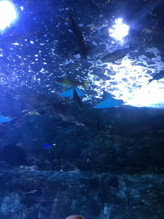 Newport Aquarium: photo3.jpg