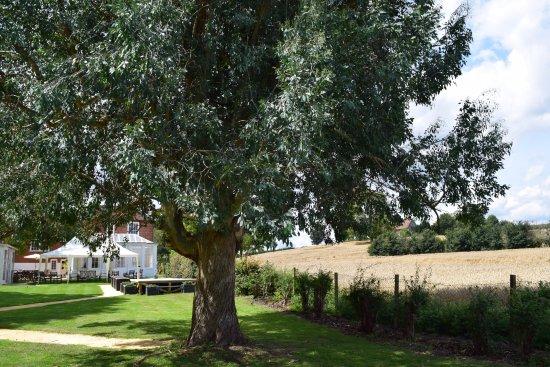 Landscape - Picture of Downham Hall - Tripadvisor
