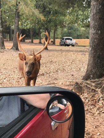Jacksonville, TX: Cherokee Trace Drive-Thru Safari