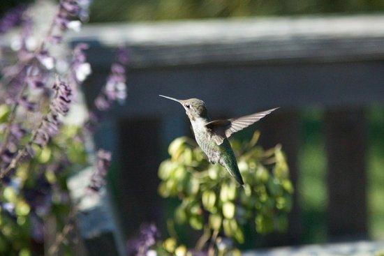 Mendocino Coast Botanical Gardens: I got lucky here