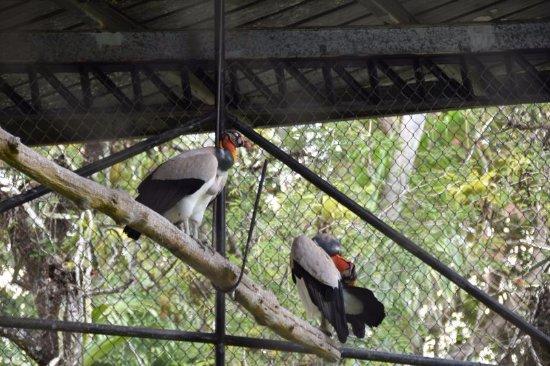 Summit Botanical Gardens: Vogelkäfig