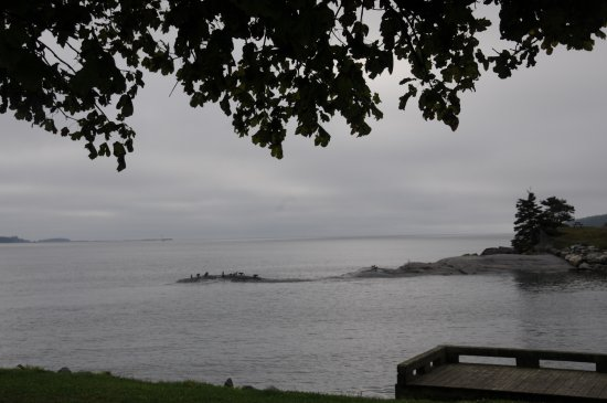 Point Pleasant Park: cloudy day