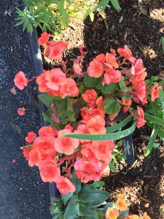 Shelburne Falls, Массачусетс: Flowers on the bridge
