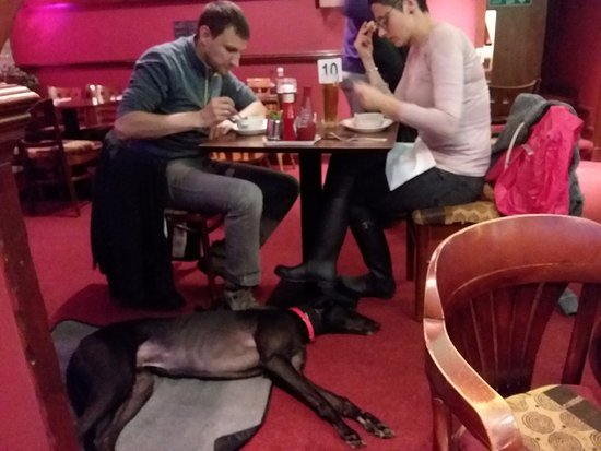 Kinlochleven, UK: The sweet greyhound at the table next to us. Love it! Can't do that in the U.S.