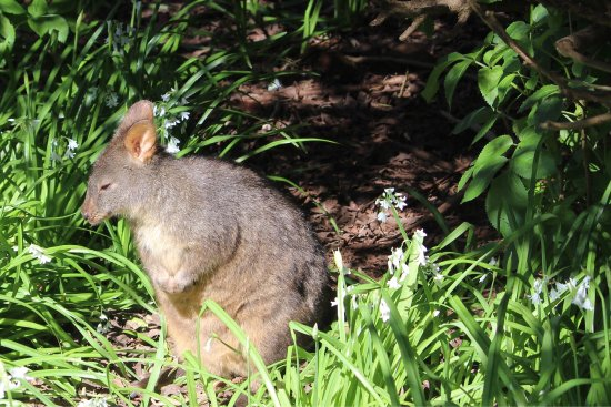 Stanley, Australië: photo3.jpg