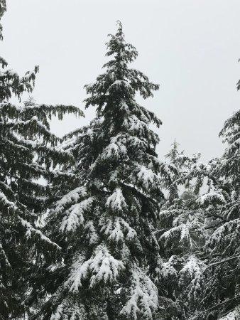 Grouse Mountain: photo4.jpg