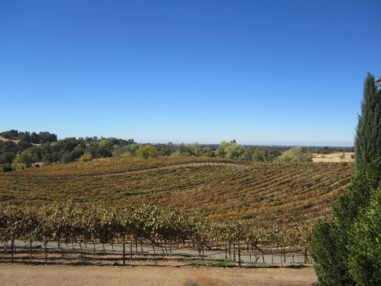 Lincoln, CA: Beautiful Vineyard