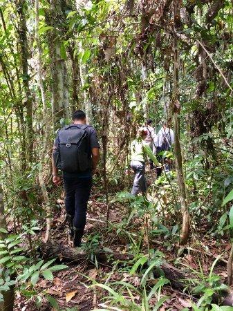 Bilit, Malaysia: Jungle hike