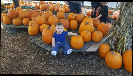 ميريديث, New Hampshire: Fall fun at Moulton Farms